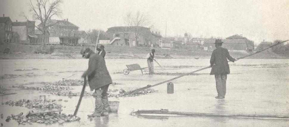 This image shows men harvesting mussels through the ice near LeClaire Iowa around the turn of the 20th century.  The regional fishery (mussel-ry?) for mussels was in high gear at this point, with a market for pearl buttons on men's and women's clothing fu